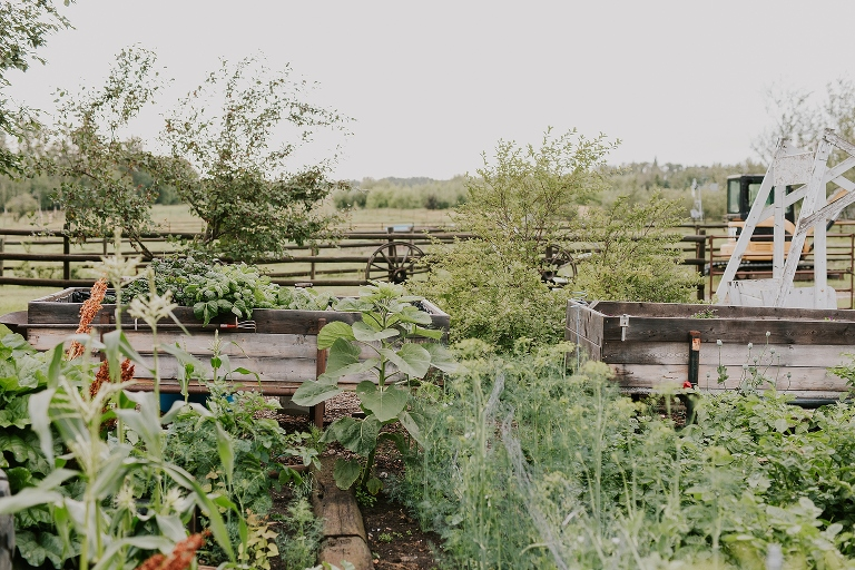 0005 - Ruth and Chris Engagement at country acreage farm near Edmonton Alberta by Emilie Smith Adventure Photography - 9802_Stomped.jpg