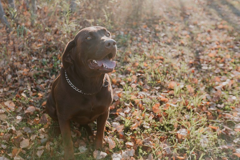 Fall Country Engagement Session Photos with Dog